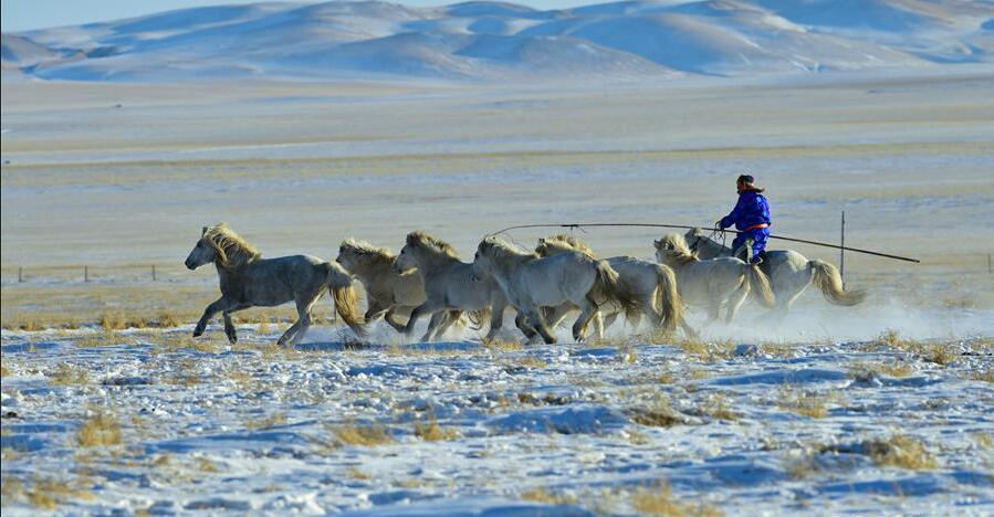 马背民族雪原展绝技
