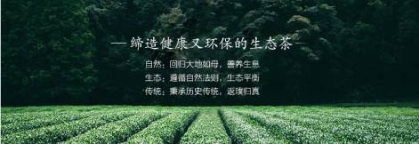 东方美人茶|熟果蜜香,灵动生姿