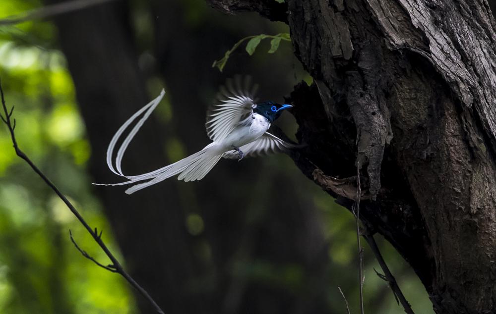 2019京山观鸟节来了,太力约你来看鸟